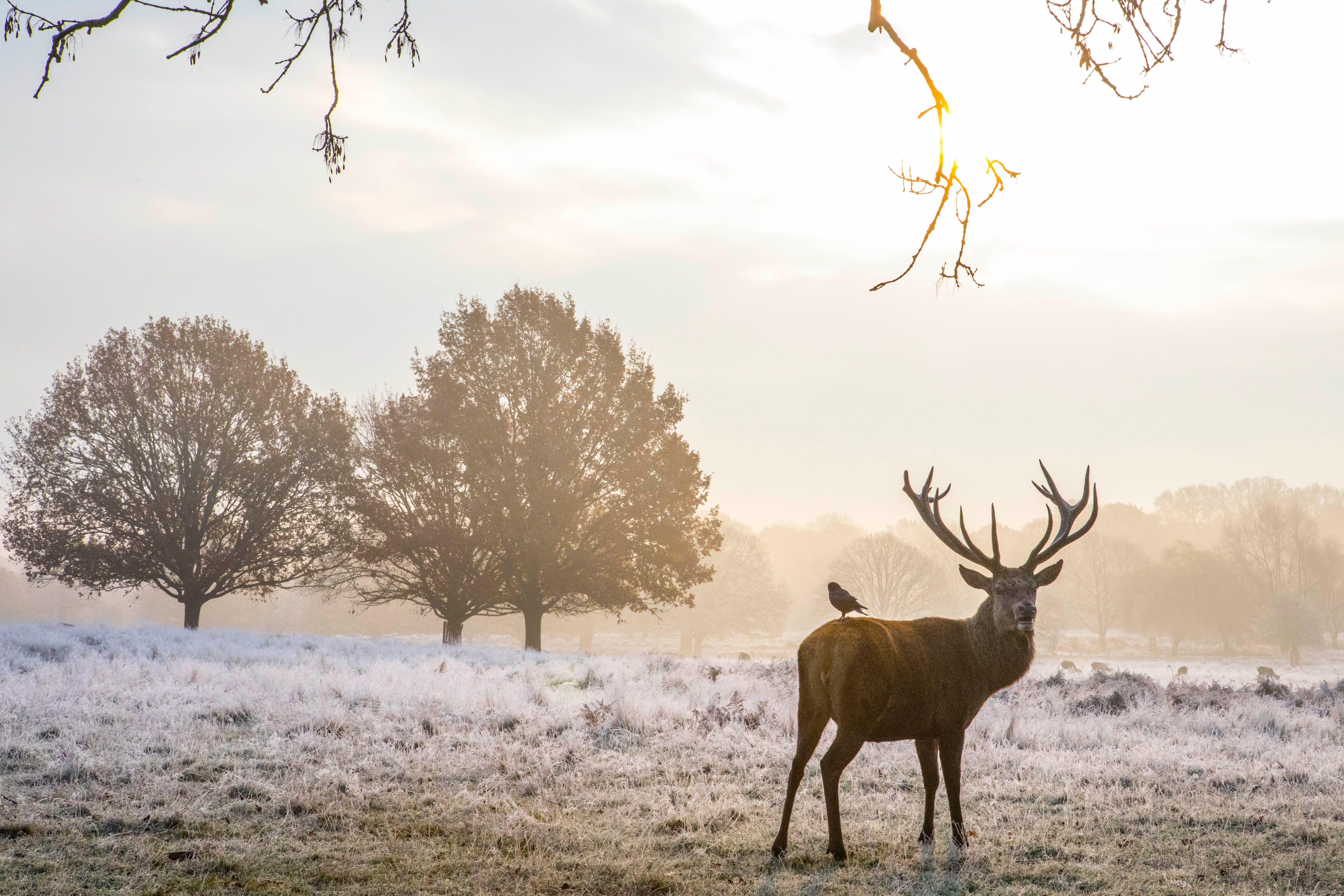 Seasonal weather, Richmond Park, London, UK - 22 Nov 2018