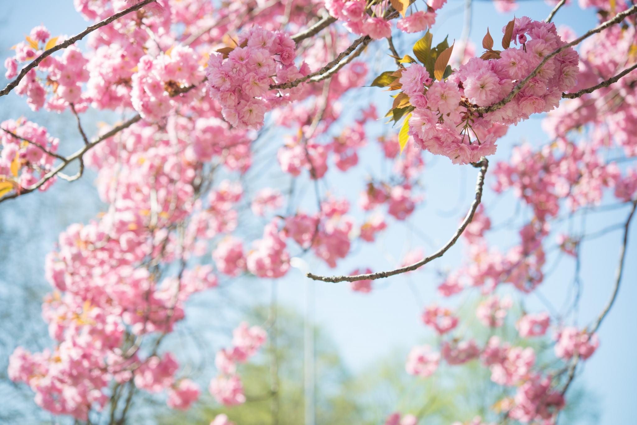 beautiful-bloom-blooming-1038508