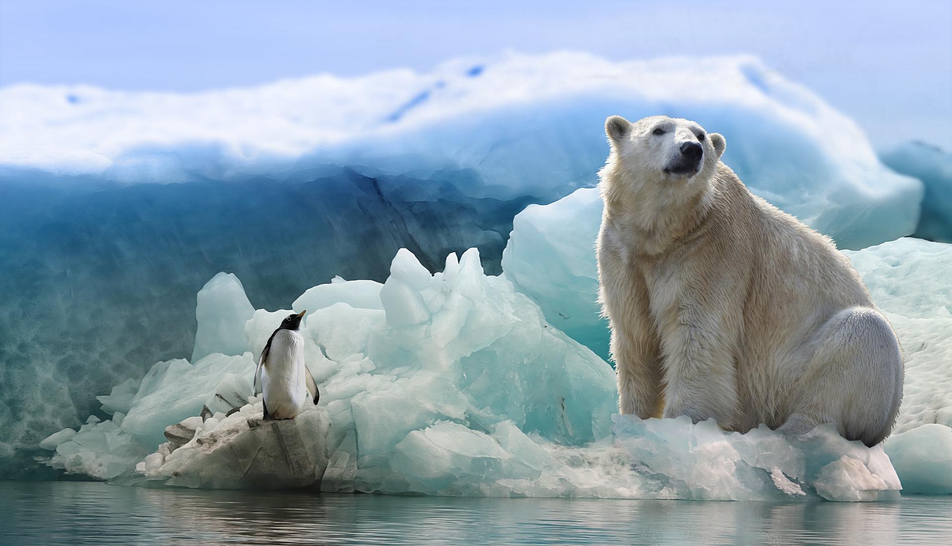 polar-bear-3277930_1920.jpg